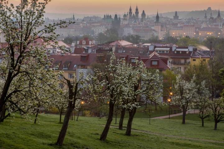 Blooming Petřín Hill