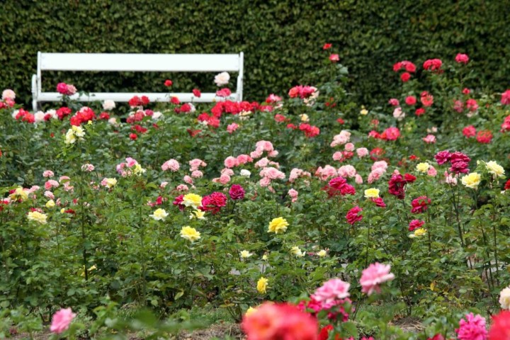 The lovely rose garden is located at the Petřín Hill between the Baroque fortifications, Štefánik's Observatory and the upper funicular station